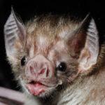 Photo of Bat Ramps